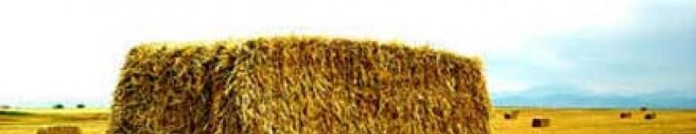 Export of bulgarian straw, in bales